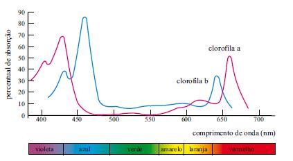 Acabamos com 6 dúvidas para provar que fotossíntese não é coisa de outro mundo!